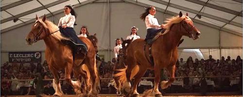Le cheval de trait comtois à l'honneur à Maîche
