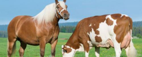 Vache de Salon : LE rendez-vous agricole à ne pas manquer !